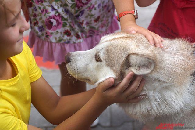 Собачка набросилась на6-летнюю девочку вНовосибирске