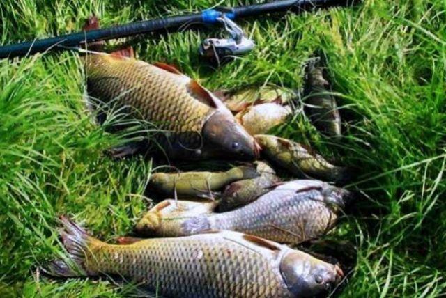 Наберегу Упы пройдёт фестиваль половле рыбы