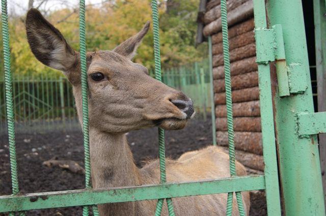 В зоопарке содержатся 207 видов животных со всего земного шара.