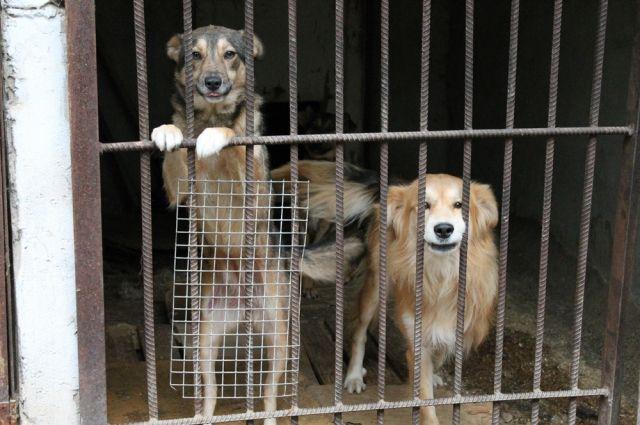 Мест в приюте для собак больше не осталось.