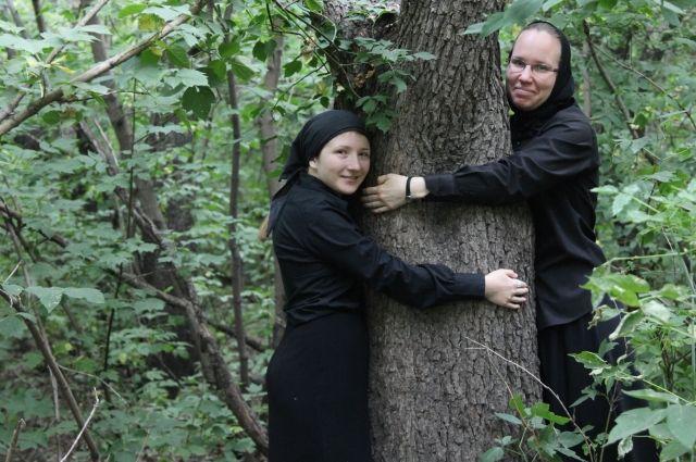 Многим деревьям на
