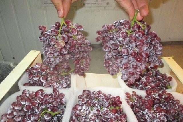 Виноград стурецкими пестицидами пытались провезти через границу вБрянске