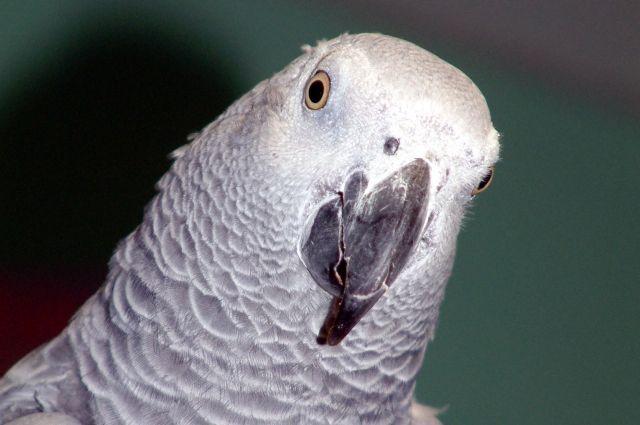 Попугай жако улетел изПермского зоопарка