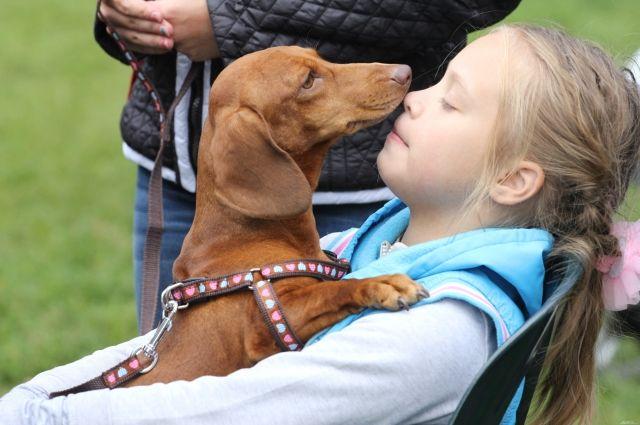 ВЕйске туристы потеряли собаку сдрагоценностями на млн руб.