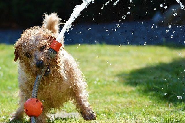 Человек собаке друг: ученые раскрыли секрет преданности четвероногих