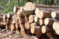 На Приангарье приходится до 70% нелегально заготавливаемой древесины в России.