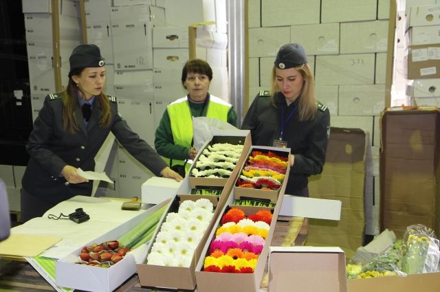 Неменее 56 тыс. импортных цветов привезли вКрасноярск к1сентября