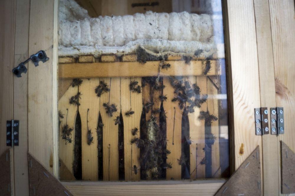 Пчёл, как и мёд, считают килограммами. Одна пчелиная семья весит от 5 до 7 кг.