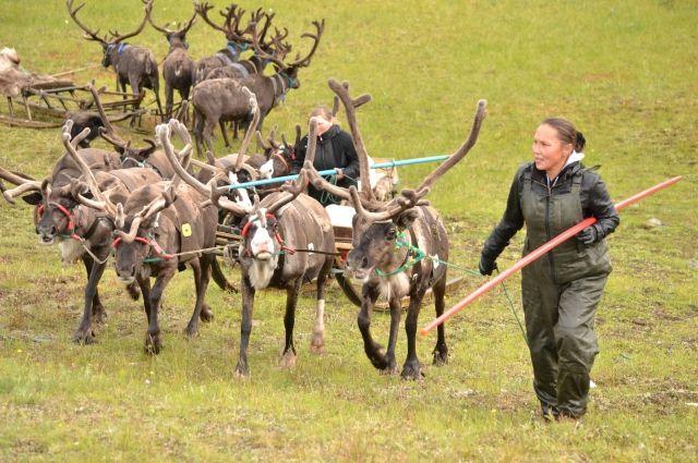 ВАлтайском крае пройдет Всемирный съезд оленеводов