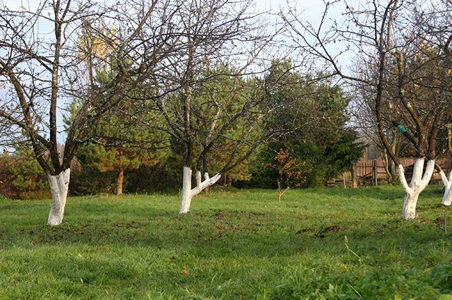 На улице Конева посадят 144 дерева.