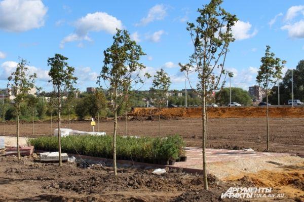 Перед училищем высадили деревья