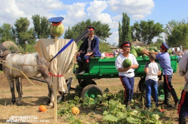 Зрители убирали арбузы с поля в тележку, запряженную двойкой коней.