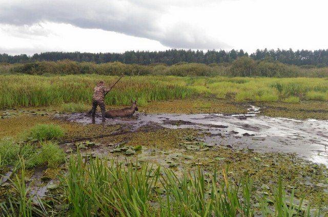 ВРязанской области изболота спасли лосиху