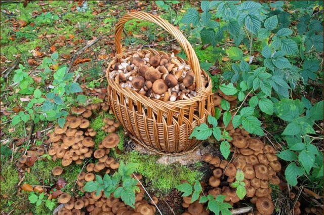 Отправляясь за грибами нужно помнить о правилах поведения в лесу.