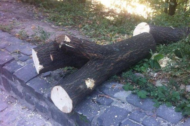 Насклонах Старокиевской горы вырубили больше сотни деревьев