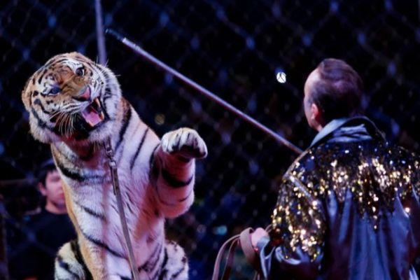 Московский цирк подарит вам море эмоций и адреналина!