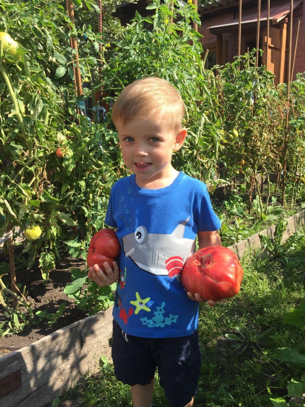 Вот такие вот сеньоры под названьем «помидоры»!