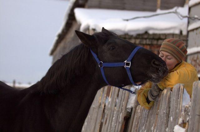 Лошадь - умное животное: с первого взгляда поймёт, кто ты такой.