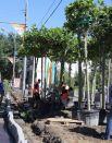 Накануне шли последние приговления: коммунальщики высаживали деревья и формировали газоны.