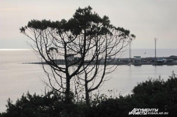 На Утрише можно встретить деревья самой причудливой формы.