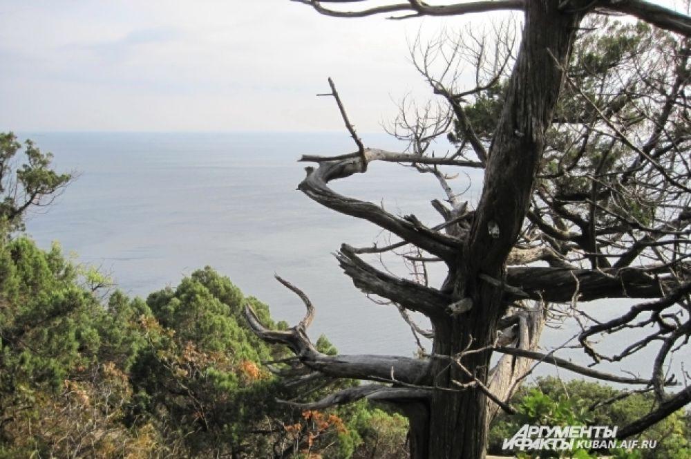 Даже сухие деревья на Утрише завораживают взор.