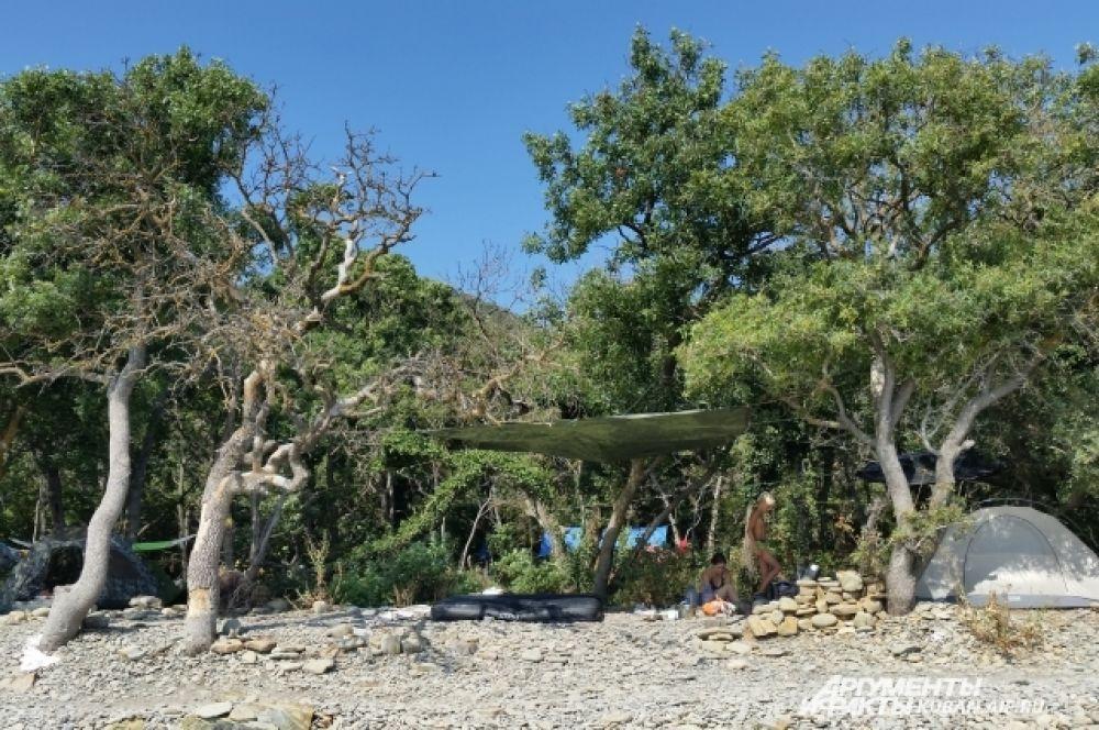 В тени деревьев туристы устанавливают свои палатки.