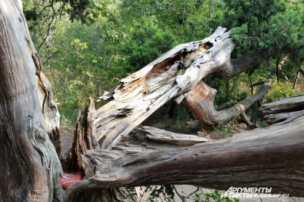 Местная достопримечательность - дерево «Лотос». По приданию его когда-то расколол удар молнии.