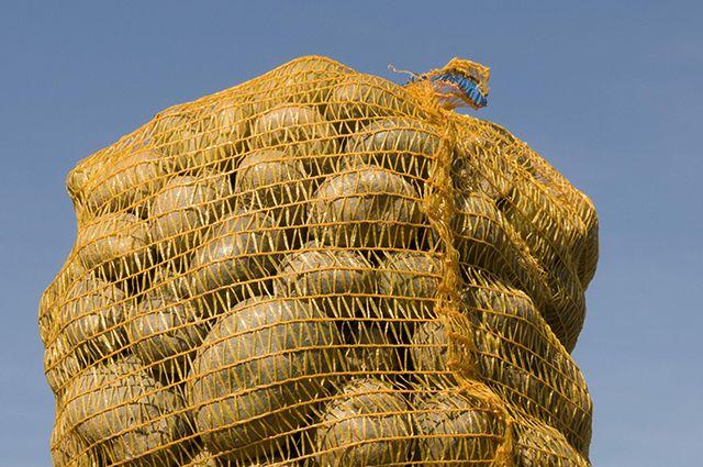 ВСамаре дорожают яйца имасло сливочное