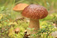 Мужчины отправились за грибами.