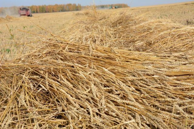 Частные закупщики опустили цены на зерно.