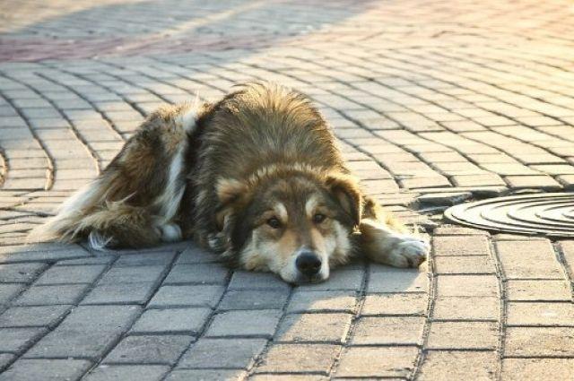 Накиевском пустыре около метро «Славутич» расстреляли бездомных собак