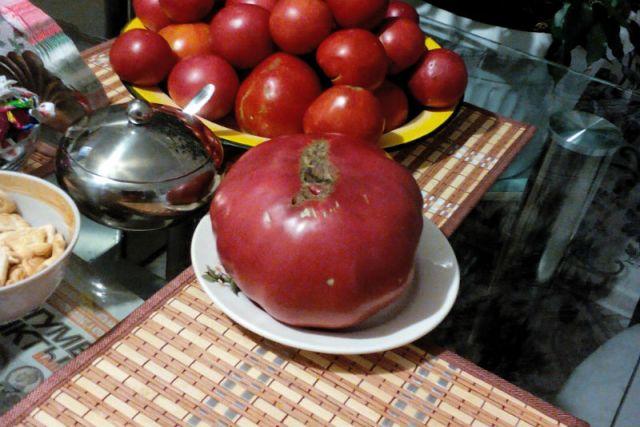 Делюсь своим невиданным урожаем. Специально взвесил некоторые плоды, попарно и поштучно.