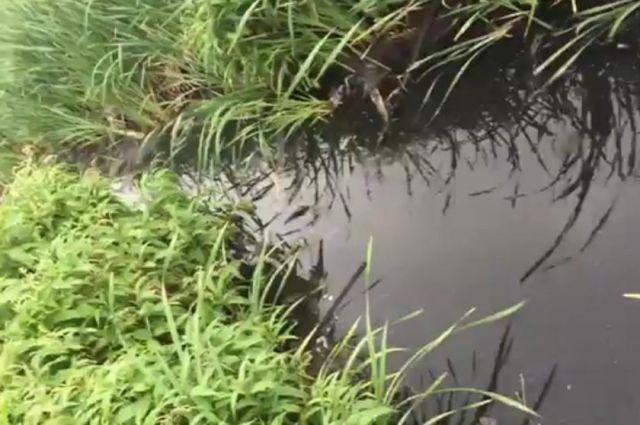 Генпрокуратура требует привести впорядок реку Голубка вБрянске
