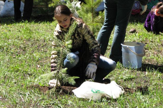 За год ребята засаживают молодыми деревьями от 65 до 100 гектаров земли.