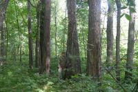 Старый лес. Одно из самых старых насаждений Старомайнского района. Здесь произрастает сосна обыкновенная высотой более 30 метров. Её возраст около 180 лет (1830 г.).