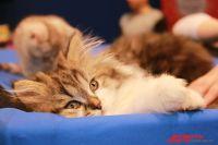 В Калиниграде автомобилист спас котенка, выпавшего из машины на дорогу.