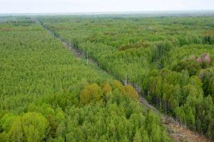 В лесных, труднодоступных районах необходимо прокладывать просеки.
