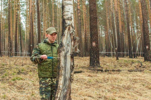 Уважаемые рабочие лесного хозяйства!