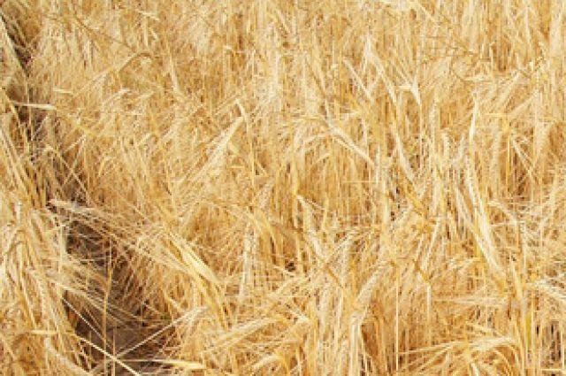 Пермские власти из-за огромных потерь урожая ввели режим чрезвычайной ситуации