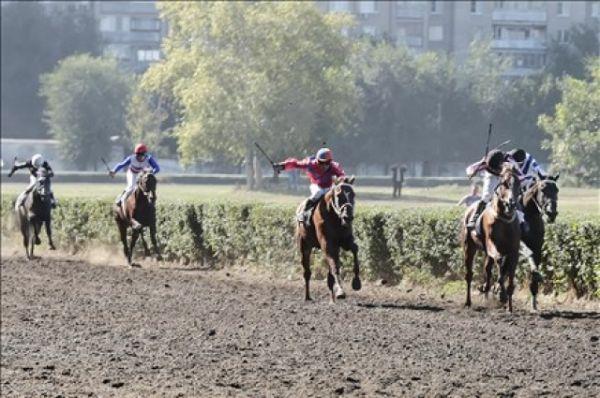 Скачки на Кубок губернатора Ростовской области на дистанцию 2400 метров проводятся с 2003 года среди лошадей полукровных пород в возрасте трёх лет и старше и являются самыми престижными соревнованиями сезона.