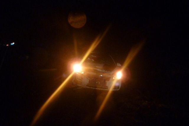 Новая Ладога: шофёр «Рено» сбил лося натрассе Вологда