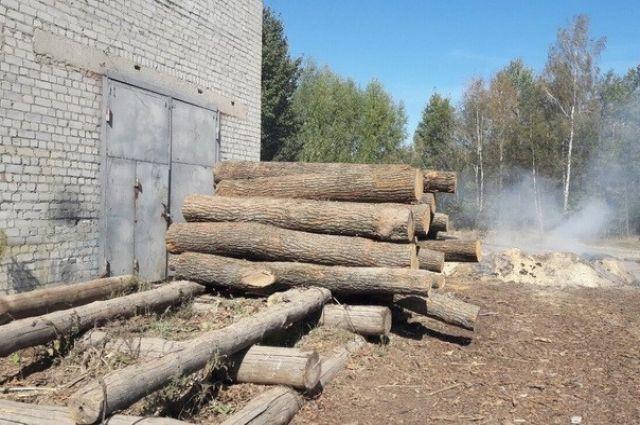 НаХмельнитчине дерево убило 17-летнего юношу