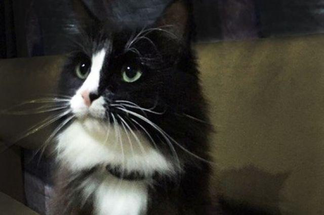 Навокзале в столице потерялся кот-актер Семен изпермского театра