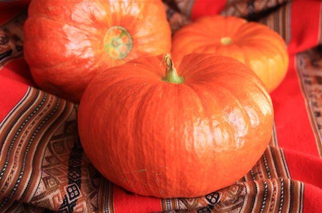 Тыква - самый яркий и красивый овощ.