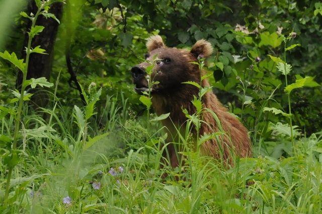 Насевере Красноярского края медведь напал намужчину водворе его дома