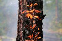 Почти 2 млн га лесов охвачены огнём в Иркутской области и Красноярском крае.