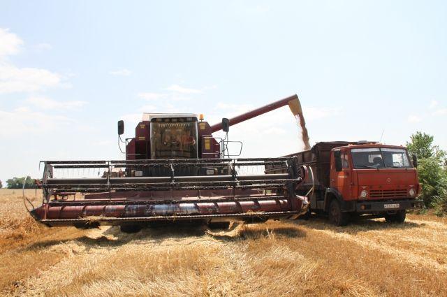 Сбор зерновых ещё не закончен.