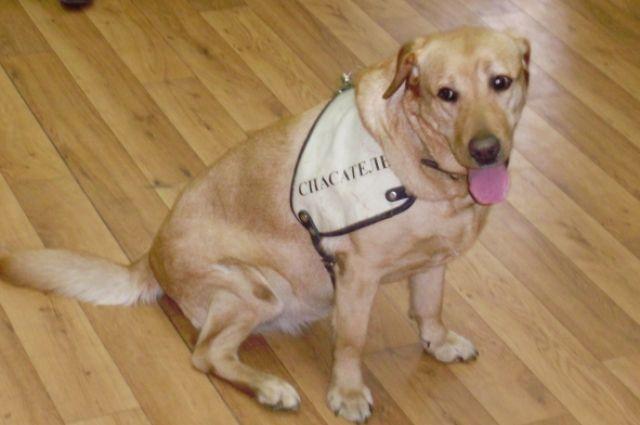 В Калининграде появится памятник собаке, спасшей 52 человека.