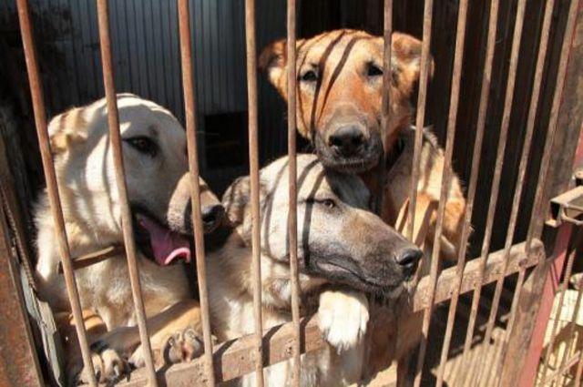 ВБрянске увладелицы 6-ти собак хотят отобрать квартиру