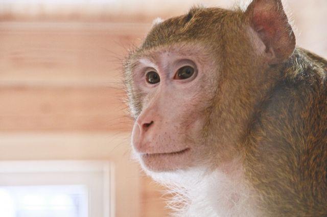 Три обезьяны изПерми направились самолетом встолицу